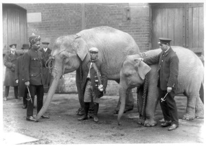 View of Burmese elephants with their keepers at London Zoo in 1923. Image property of Westminster City Archives.