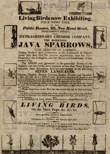 Advert for Java sparrows on New Bond Street, 1820s. Image property of Westminster City Archives