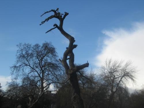 Regents Park Trees