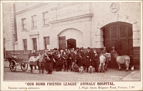 Patients Awaiting Admission, Our Dumb Friends League Aniimal Hospital. Image property of Westminster City Archives.