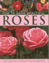 How to grow beautiful roses, by Peter McHoy