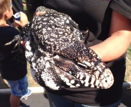 Tommy the Tegu at Walterton & Elgin Community Homes' Summer Festival 2015