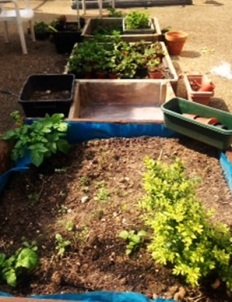 Church Street Library community gardening project, May 2016