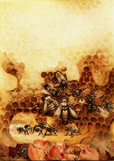 The Life of The Bee by Maurice Maeterlinck, 1911. 'The Queen', p20